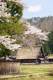 Shirakawago village with cherry blossom Stock Photos