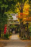 Shirakumo Shrine in Kyoto. Autumn view of Shirakumo Shrine entrance in Kyoto Imperial Park royalty free stock images