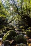 Shiratani Unsuikyo wąwóz, Yakushima Japonia zdjęcia stock