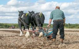 Shire τα άλογα παρουσιάζουν Στοκ Εικόνες