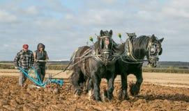 Shire τα άλογα παρουσιάζουν Στοκ φωτογραφία με δικαίωμα ελεύθερης χρήσης
