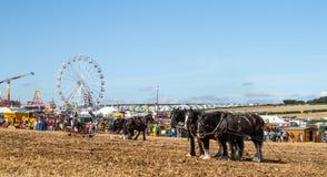 Shire τα άλογα που εργάζονται παρουσιάζουν έδαφος Στοκ Εικόνες