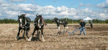 shire τα άλογα που οργώνουν παρουσιάζουν Στοκ εικόνα με δικαίωμα ελεύθερης χρήσης