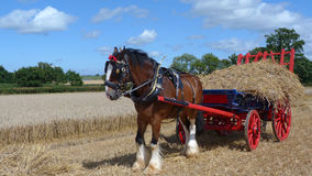 Shire Horse at a country show in England. A shire horse with a wagon of straw at a country show in England UK Royalty Free Stock Image