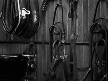 Shire Horse Harness Stock Photo