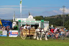 Shire Horse pulling Dairy Cart at Garstang Show Stock Image