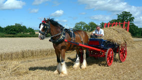Shire Horse with straw wagon at Country Show. Shire Horse at a Farm Working Day event  in Somerset England Stock Photo