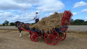 Shire Horse with a wagon of straw. Shire Horse with a red painted wagon of straw at a Heavy Horse Country Show in the UK in Summertime Royalty Free Stock Photo