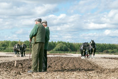 Shire horses ploughing at show Stock Image