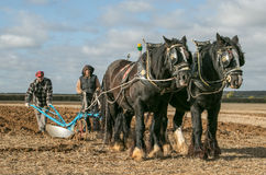 Shire horses at show. Shire plough horses ploughing at show or ploughing match Royalty Free Stock Photos