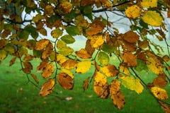 Autumn colours. Shirehampton Bristol golf course Stock Photos