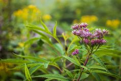 Shiretoko Forest Wildflowers royalty-vrije stock afbeeldingen