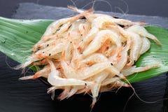 Shiroebi, japanese glass shrimp royalty free stock photos