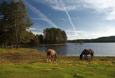 Shiroka poliana dam with horses Stock Photography
