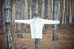 Shirt on a tree Royalty Free Stock Image