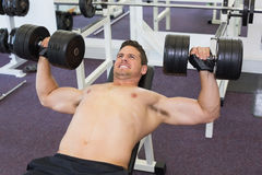 Shirtless bodybuilder lifting heavy dumbbells lying on bench Royalty Free Stock Images