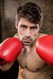 Shirtless man wearing boxing gloves Royalty Free Stock Images