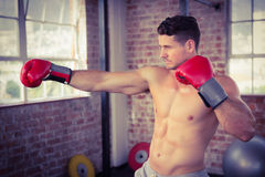 Shirtless man wearing boxing gloves and posing Royalty Free Stock Photography