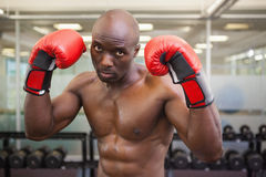 Shirtless muscular boxer in health club Stock Photography