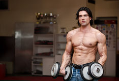 Shirtless muscular man holding weights (two dumbbells) Stock Photography