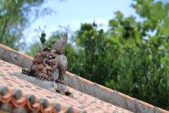 Shisabeschermer van Koninkrijk van Ryukyu op het dak in Okinawa stock afbeeldingen