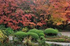 Shisen从事园艺秋季 库存图片