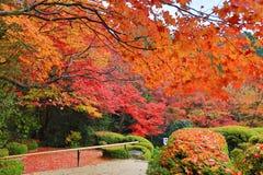 秋季Shisen从事园艺 免版税库存照片