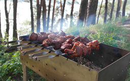 Shish kebab barbecue on  nature. Royalty Free Stock Images