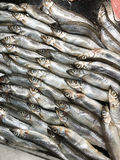 Shishamo fish, smelt fish in the food shop Stock Photos