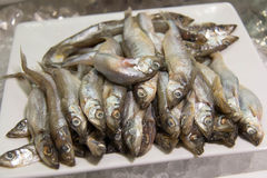 Shishamo fish Royalty Free Stock Photography