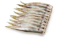 Shishamo, japanese smelt with roe. On a white background Royalty Free Stock Images