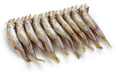 Shishamo, japanese smelt with roe Royalty Free Stock Image