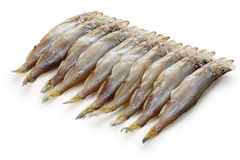 Shishamo, japanese smelt with roe Stock Photos