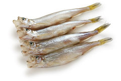 Shishamo, japanese smelt with roe Royalty Free Stock Photography