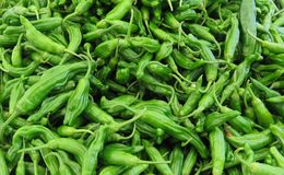 Shishito Peppers Stock Image