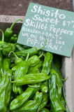 Shisito Sweet Skillet Peppers At Farm Market Royalty Free Stock Photos