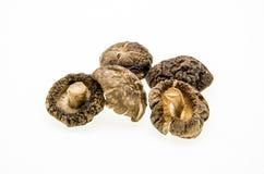 shitake высушенных грибов На белой предпосылке Стоковая Фотография