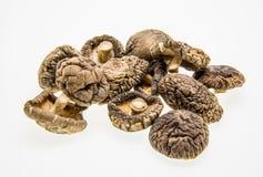 shitake высушенных грибов На белой предпосылке Стоковое Фото