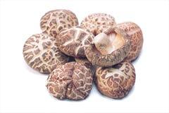 shitake высушенных грибов Стоковое Изображение