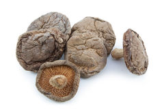 Shitake mushroom Stock Image