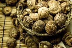 Shitake mushroom Royalty Free Stock Images