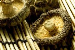 Shitake mushroom Stock Images