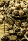 Shitake mushroom Stock Photo