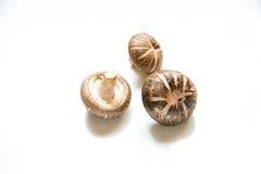 Shitake mushroom Royalty Free Stock Photography