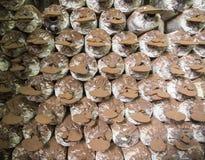 Shitake mushroom house Stock Photography