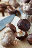 Shitake mushroom prepare for cooking Stock Photography