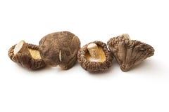 Shitake mushroom Royalty Free Stock Image