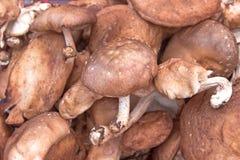 Shitake mushrooms Royalty Free Stock Photos