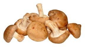 Shitake Mushrooms Stock Images