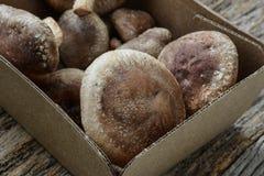 Shitake Mushrooms Stock Photo